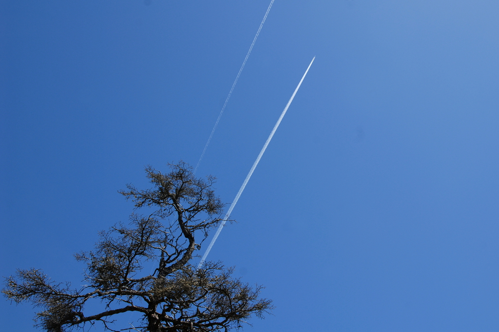 Aircraft contrails over Taylor's Head Provincial Park.