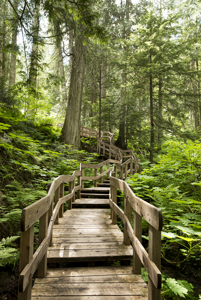 Giant Cedars Boardwalk Trail in Mount Revelstoke National Park, BC.